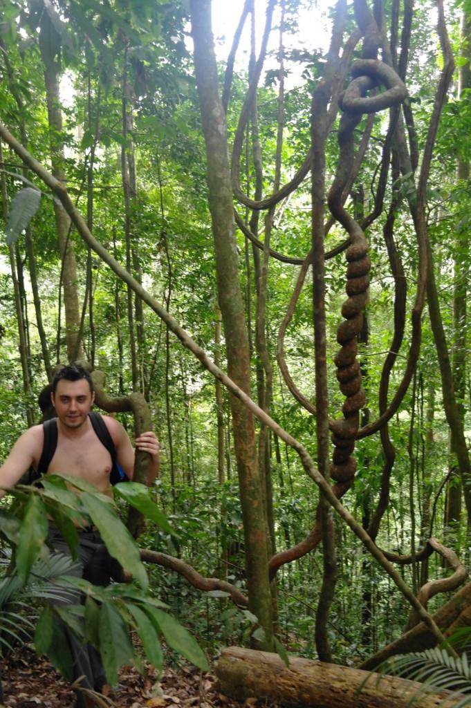 Bogusz w dżungli